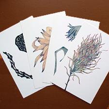 ポストカード/植物