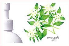 化粧品 olive manon/広告