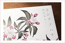リンゴノハナ/CDジャケット