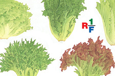 RF1/店頭用フライヤー