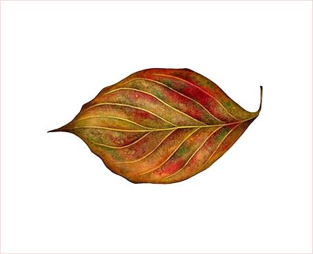 2001.11/桜の紅葉