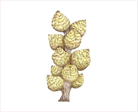 2001.11/木の実