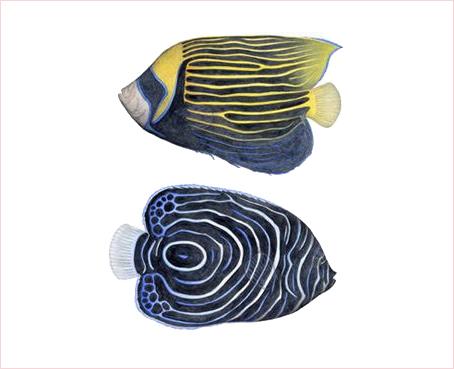 2002.1/熱帯魚