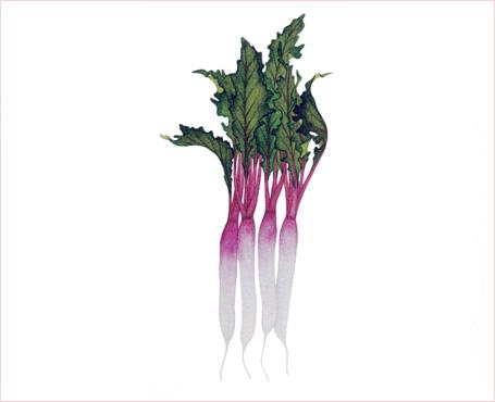 2009.1/日野菜