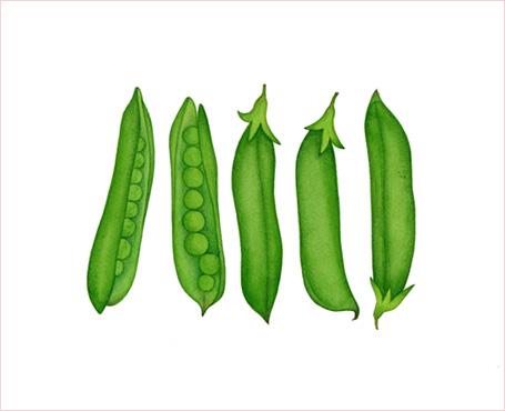 2011.5/エンドウ豆